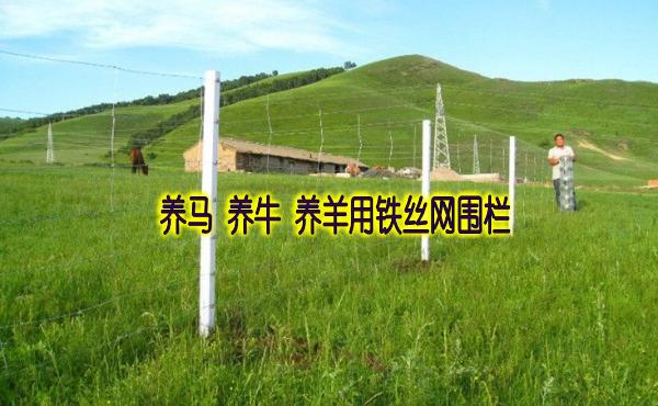 养马用铁丝网围栏