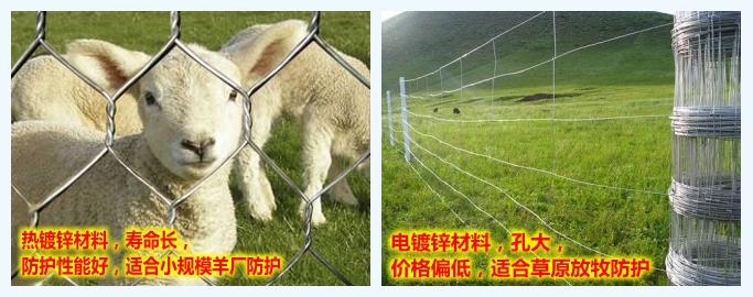 拧花圈羊网优势对比