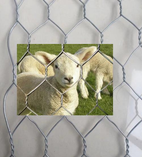 拧花网围羊网